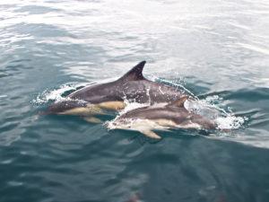 sealifesafaris3