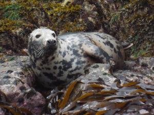 sealifesafaris9